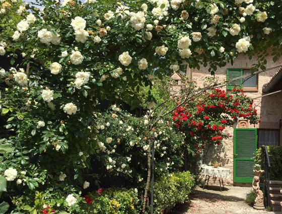 B&B a Foligno il giardino